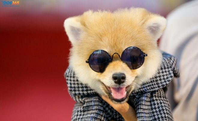 Kinh doanh thời trang cho thú cưng