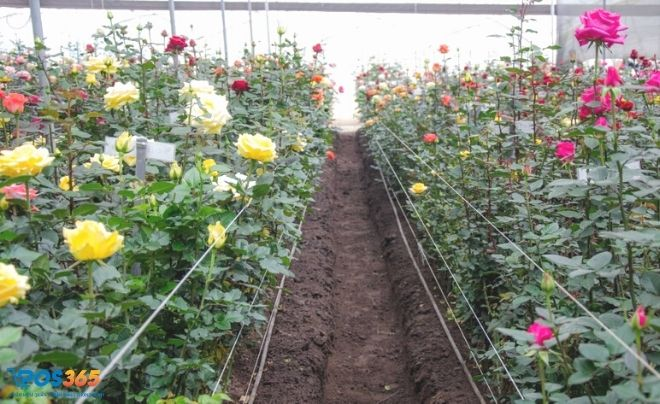 Ý tưởng kinh doanh trồng hoa