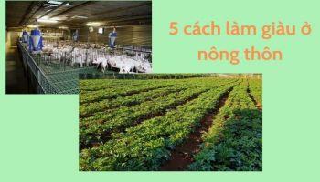 5 cách làm giàu ở nông thôn đơn giản mà ai cũng nên biết
